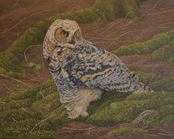 "Great Horned Owl Fledgling (11 by 14"" oil on board)"