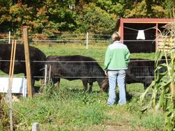 Joanne checking the herd.