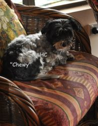 """""""Chewy"""""""