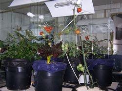 Thriving Grow Room