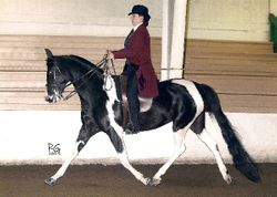 Katie and Krysta Saddleseat (National Show Horse)