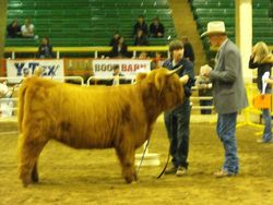 The judge talked to many competitors.
