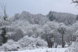 Notre paysage sous la neige