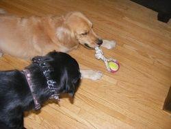 Izzy and Dakota
