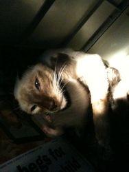 Kitten only a few hours old