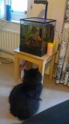 Cedric watching fish