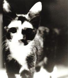 Daisy in 2001