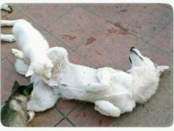 Wuluf & Pups