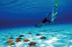 """enjoy snorkeling in """"EL CIELO"""""""