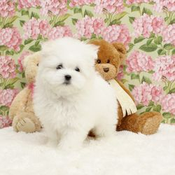 """Teddybear Pom-tese """"Snoopy"""""""