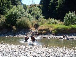 Back actoss Englishman River