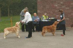 First & Second Veteran Dog