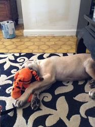 Bear with friend Tigger!