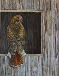 "Red-tailed Hawk (14 by 18"" oil on canvas) In Private Collection"