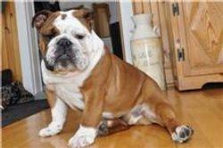 Darius puppy senior a 8 mois
