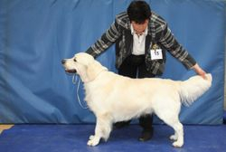 Class 5 Yearling Dog