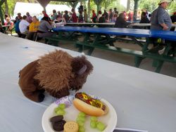 Millard the Buffalo nibbles on his lunch at the WNYIL Americans with Disabilities Act 24th Anniversary Picnic!