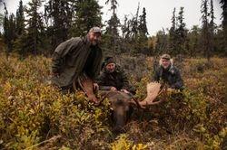 Josh Moore's Talkeetna moose