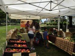 The Pumpkin Farm