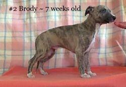 7 weeks old