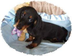 Tiny Toby