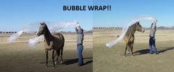 She actually really likes bubble wrap! 1.5YO