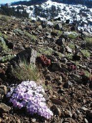 flowers near the peak
