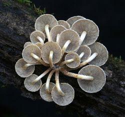 Fungi 14