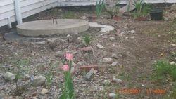 Garden of Betty