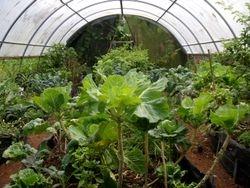 Laakea gardens