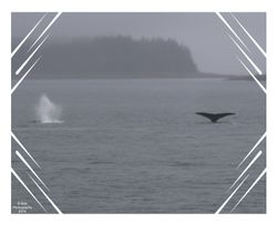 Whales playing