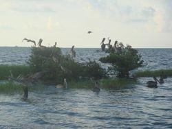 What is left of Pelican Island