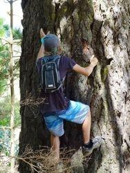 Tree Climbing Waiorongomai