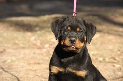 Piper at 12 weeks