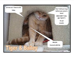 Tiger and Bailey