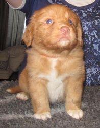 Puppy 5 - 4.5 weeks