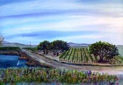 Wine Country near Los Olivos (off 101 Fwy)