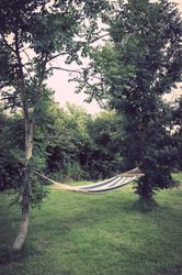 Hammock in the trees
