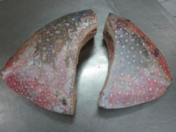 Moonfish(Lampris guttatus) HGT