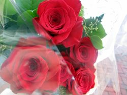 Close-Up of Five Red Roses in Bouquet of Flowers for Lying in Repose of Associate Supreme Court Justice Ruth Bader Ginsburg Outside Republic Seafood Restaurant