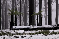 Kinglake in Snow 3
