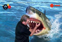 Animals, Sharks, Green Screen Photo Booth