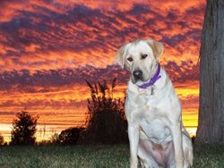 Two-year-old Luzi posing with a beautiful Western Colorado sunset