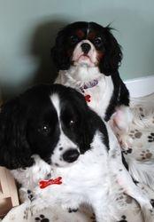 Smudge & Lottie