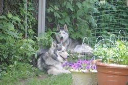 Bear FKA Silver & Mieshka