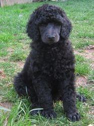 Red. 6 weeks old.