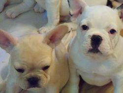 Lola & Sister Wynoka