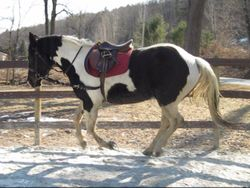 Canter work
