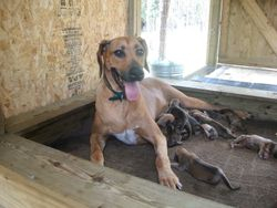 Carrie and her pups on day 3