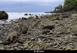 Shellfish foraging (Pulaki)